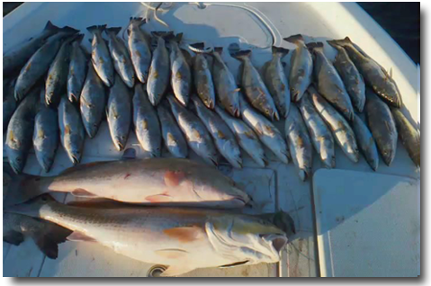 louisiana fishing reports louisiana fishing charters