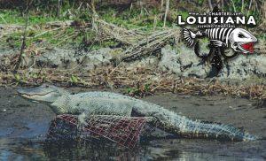 louisiana-fishing-reports-2-13-17b