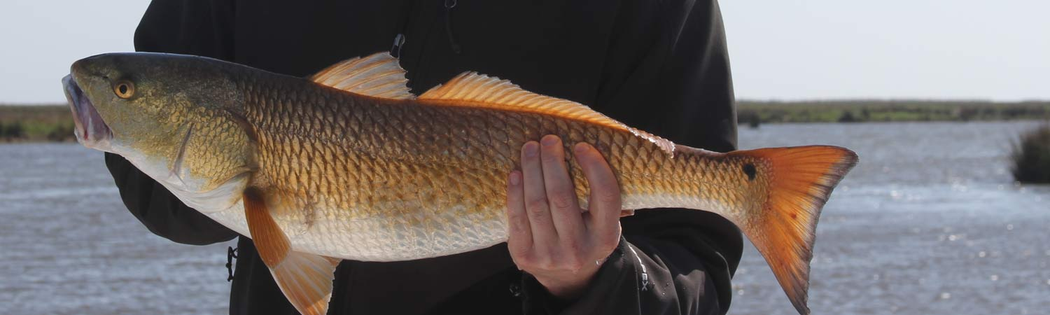 Louisiana Redfish Charters