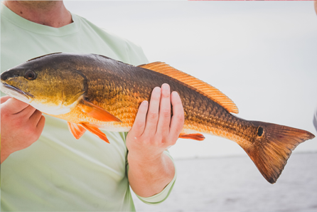 Latest Louisiana Fishing Reports